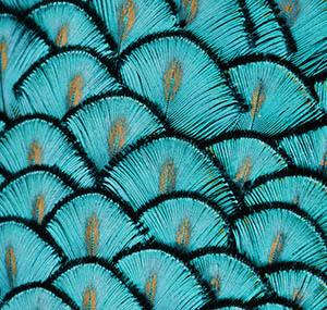 Inspiracja iluzja sztuka dekoracyjna pióra pawia