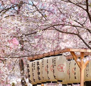 Inspiracja sztuka dekoracyjna kwiaty wiśnia japonia