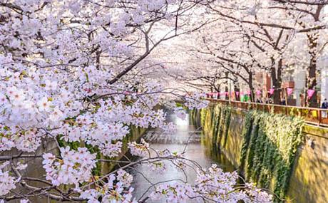 Inspiracja sztuka dekoracyjna kwiaty rzeka