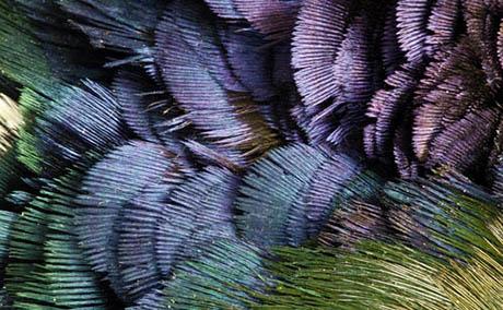 Inspiracja iluzja sztuka dekoracyjna pióra makro