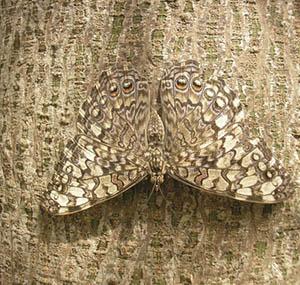Inspiracja iluzja sztuka dekoracyjna motyl